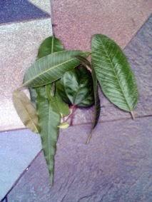 http://www.kekenaima.com/2008/08/mengelompokkan-daun.html