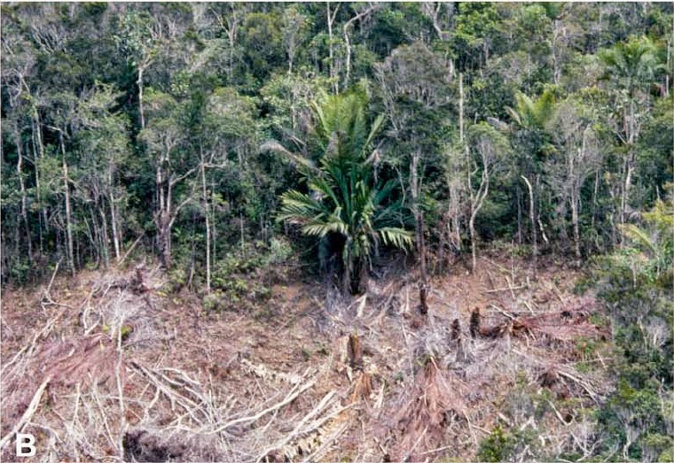 http://sciencythoughts.blogspot.co.uk/2014/10/the-conservation-status-of-madagascan.html