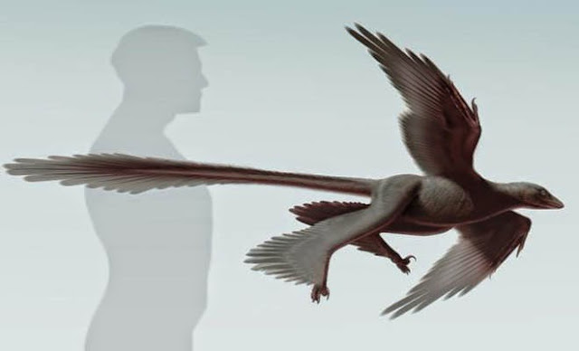 Νέο απολίθωμα φτερωτού δεινοσαύρου ανακαλύφθηκε στη Κίνα - λύνεται το μυστήριο των δράκων;