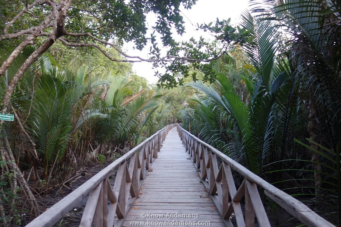 Dhani Nallah Mangrove Nature Walkway