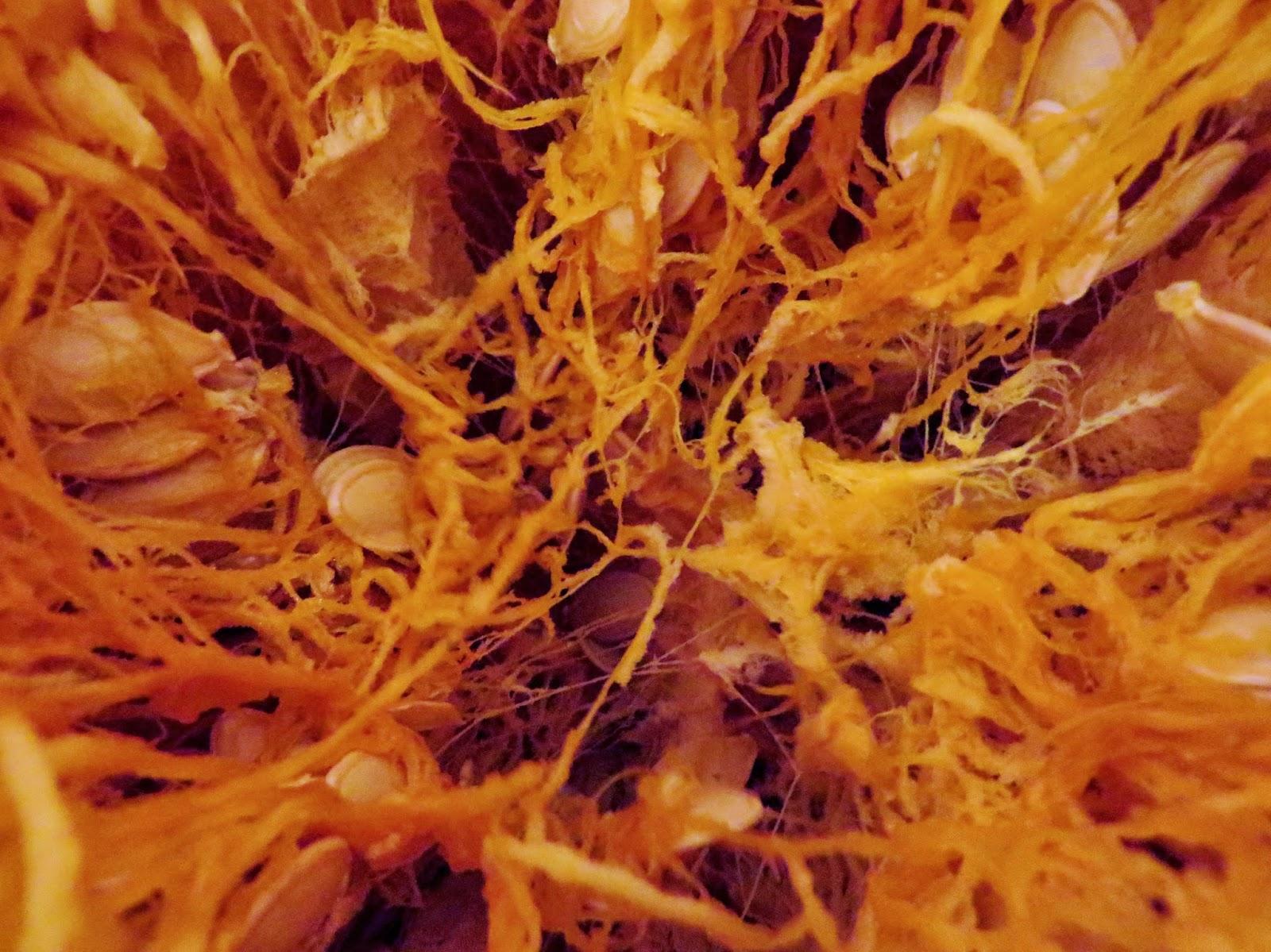 pumpkin guts, pumpkin insides, pumpkin, spaghetti squash, stringy pumpkin, pumpkin carving, halloween