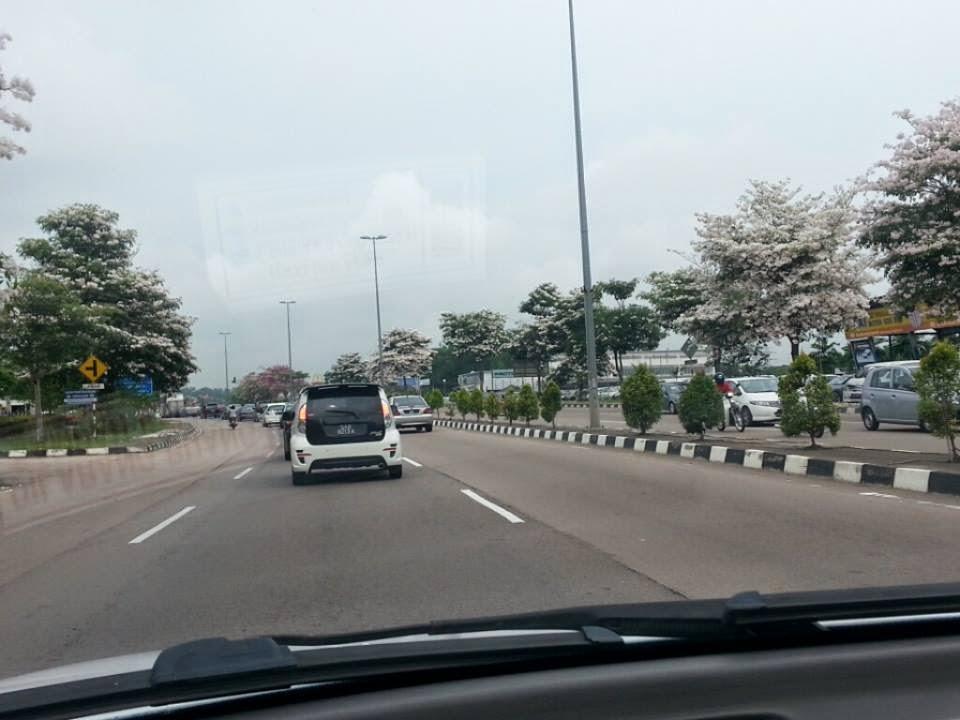 Johor Bahru Pun Alami Musim Bunga