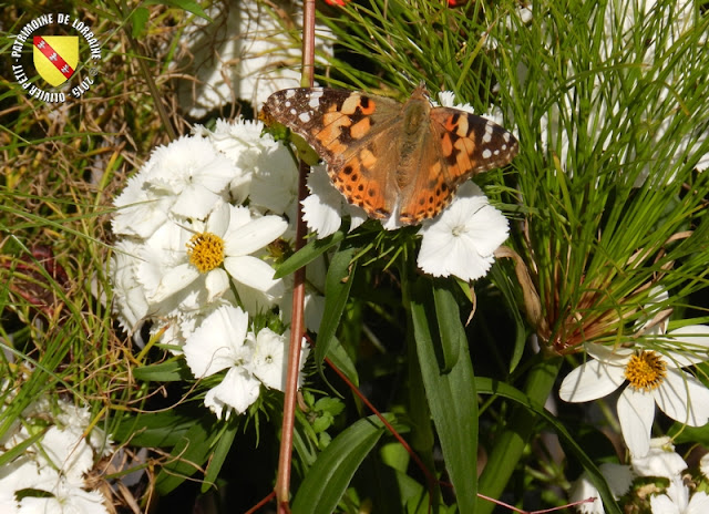 NANCY (54) - Jardin éphémère 2015 : les photos !