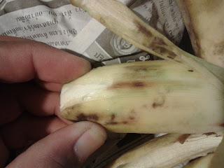 หลังจากแช่กล้วยไว้ในตู้เย็น 1 คืน