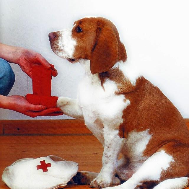 Primeros Auxilios para su mascota