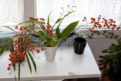 l orchidée noire nantes strathcona