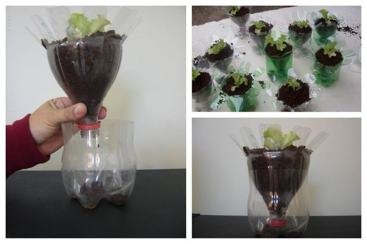 mini jardim em garrafas:Circulartesano: Reaproveitando Garrafas Pet no Jardim e na Horta