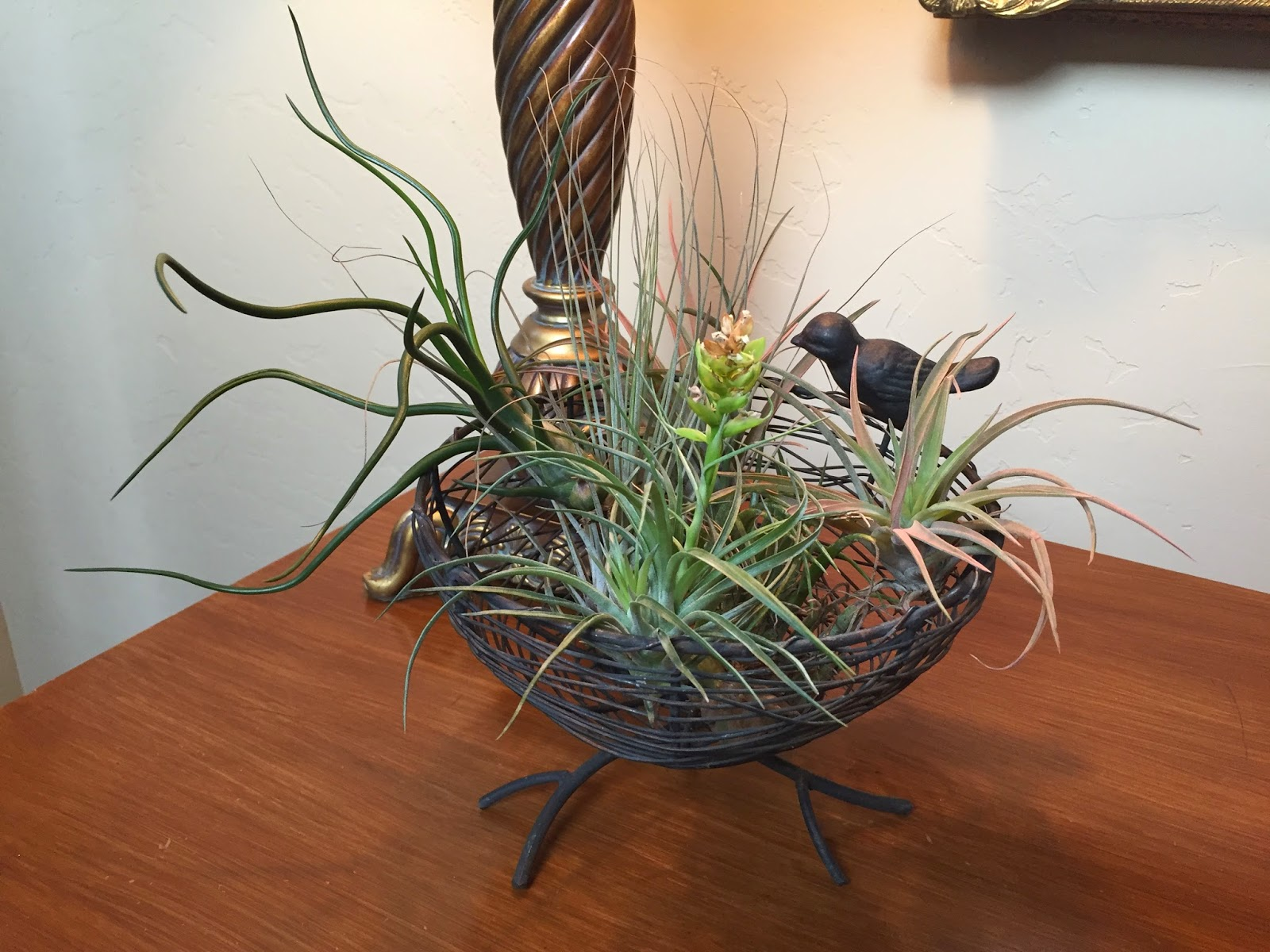 Displaying Air Plants