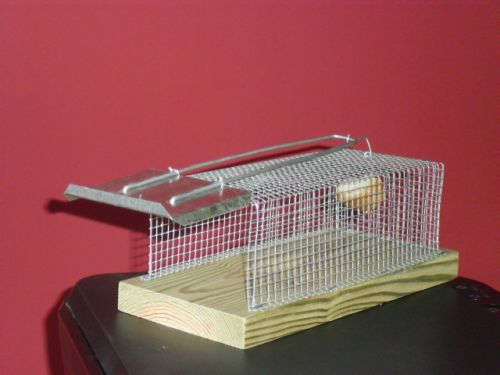 Como mejorar nuestras vidas y la de las pr ximas generaciones - Trampas para ratones y ratas ...