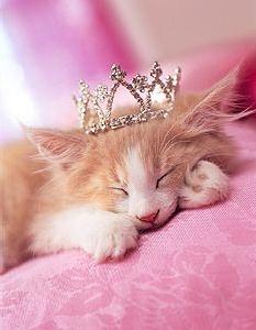 funny cute cats, cats kittens, funny cats, kitty, beautiful kittens, cute kittens picpile, cute kitty,