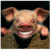 mengapa daging babi haram bahaya makan daging babi