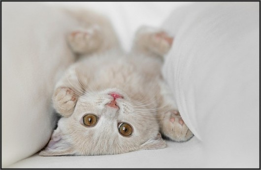 cute cat pictures for you this little cute cat's world goes upside down