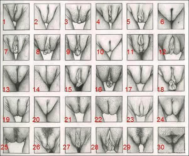 30 Tipos De Vaginas