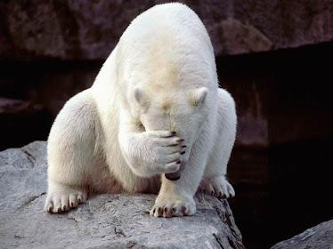 O urso sentiu vergonha disso que eu disse.