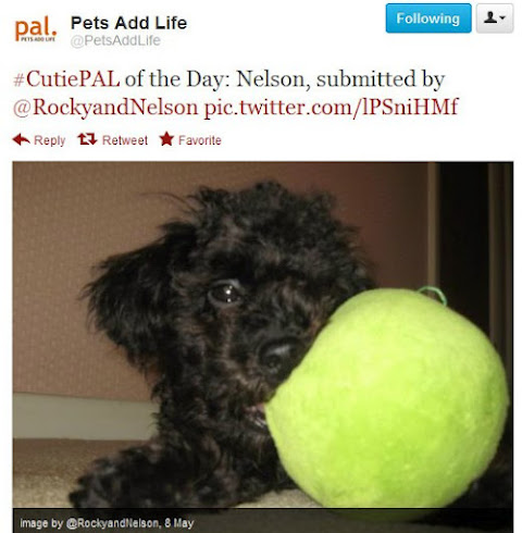 Nelson was Pets Add Life's Cutie Pal of the Day