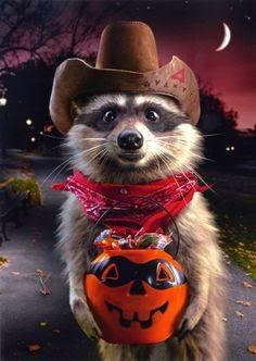Funny halloween animals2