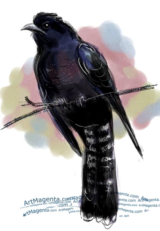 En fågelmålning av en kaffergök från Artmagentas svenska galleri om fåglar