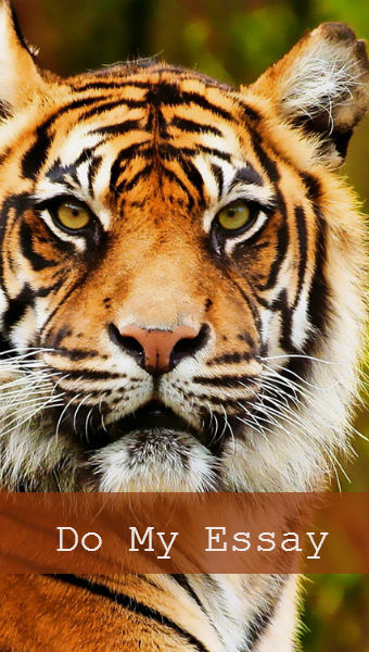 tigers essay Get help on 【 stuff the tigers essay 】 on graduateway huge assortment of free essays & assignments the best writers.