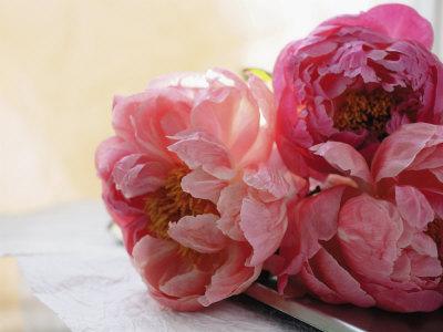 Il mio fiore preferito: la PEONIA.