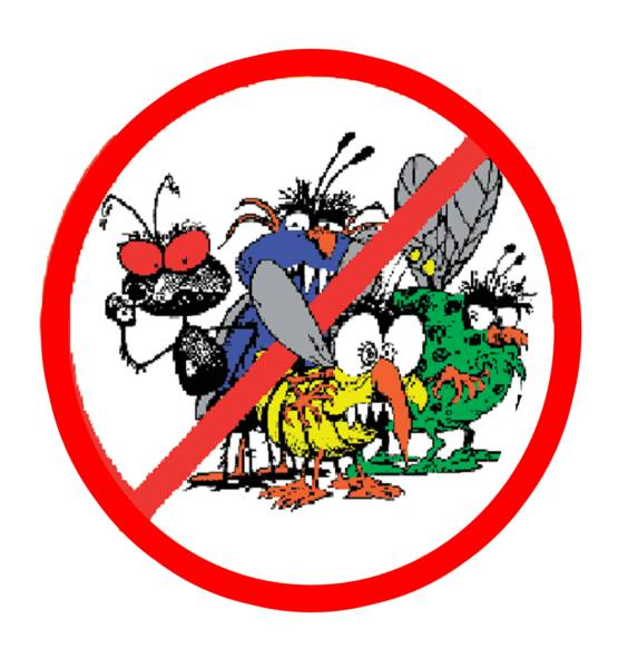 Image Result For Bugs Be Gone Pest Control