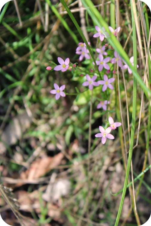 a tiny spray of pink wild flowers and bright green native grass