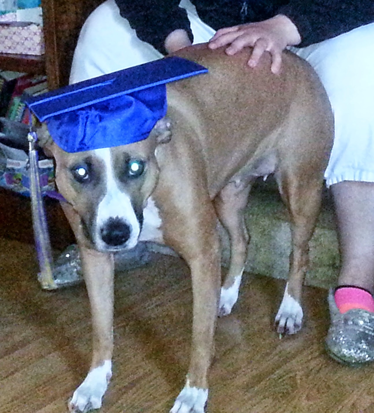 Concobar wearing a graduation cap