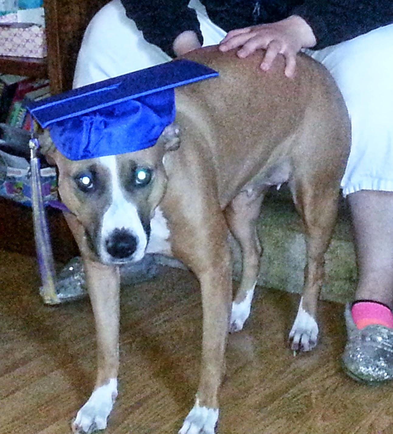 Concobar wearing a graduation cap