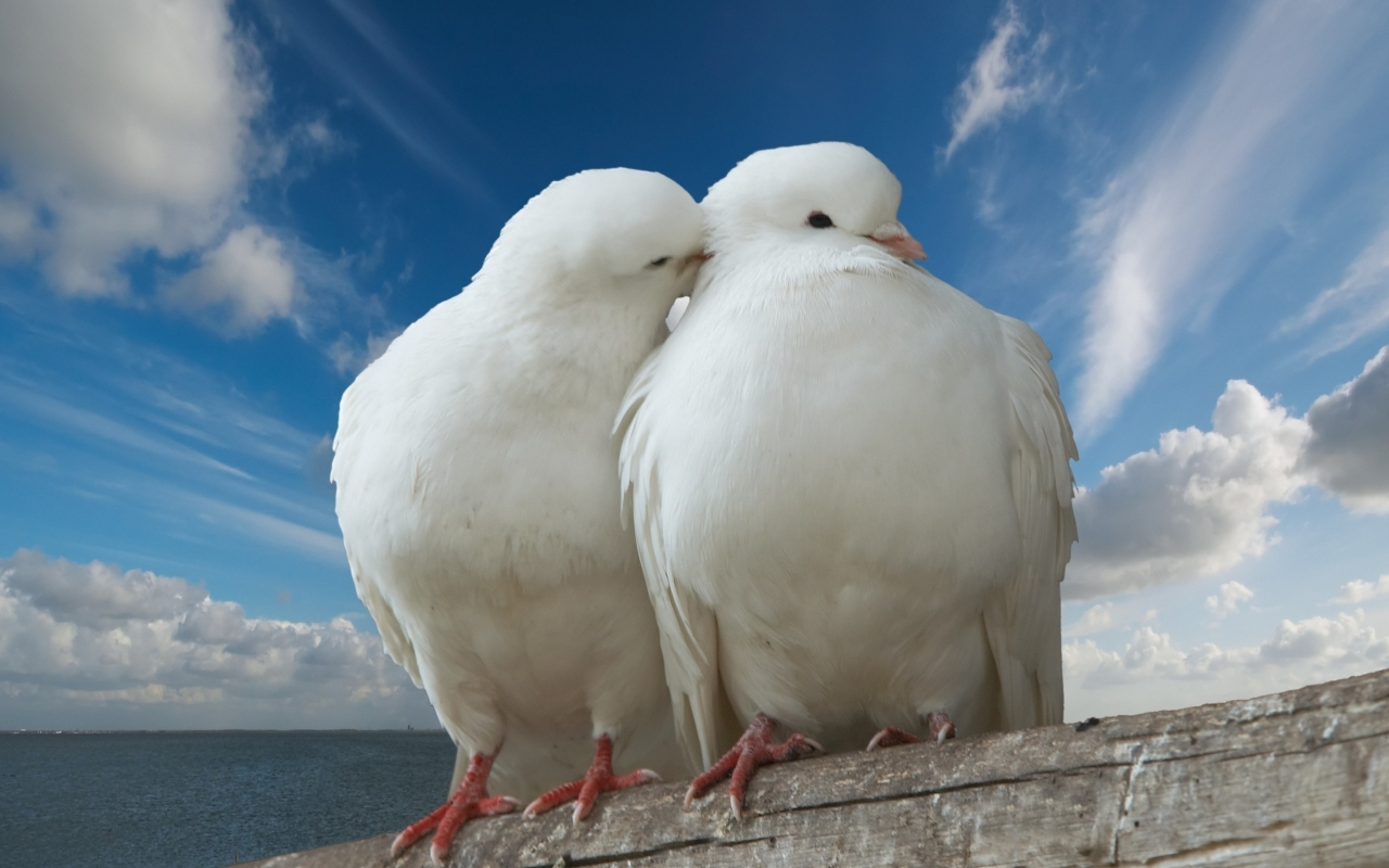 Angelic Birds