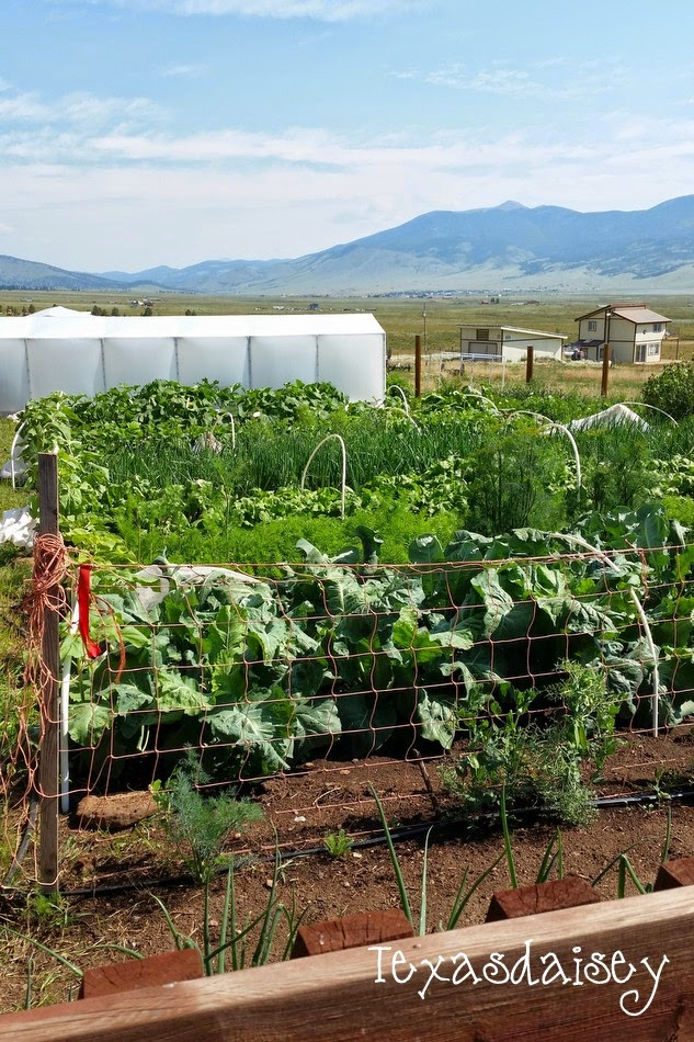 A Vegetable Garden Grown in the mountains on the Angel Fire Garden Tour