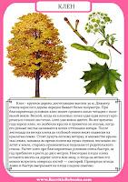 Фото листьев деревьев
