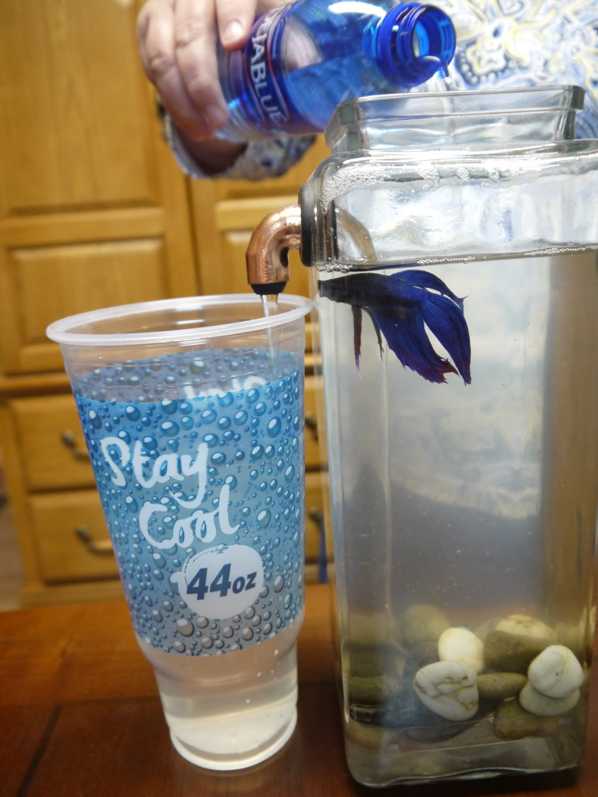 No clean aquarium betta fish tank - Here S A Video So You Can See The Noclean In Action