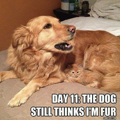 Day 11: The dog still thinks i'm fur  Funny Pictures