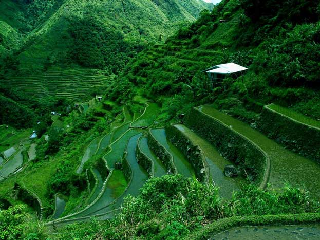 The Rice Terraces of the Philippine Cordillera