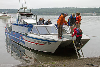 The Island Whaler