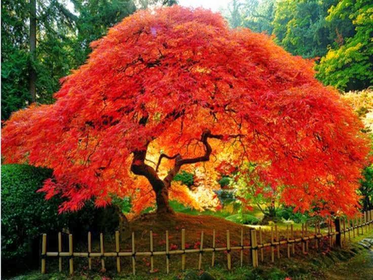 Gu a del bienestar del hada maravilla rboles for Clases de plantas ornamentales