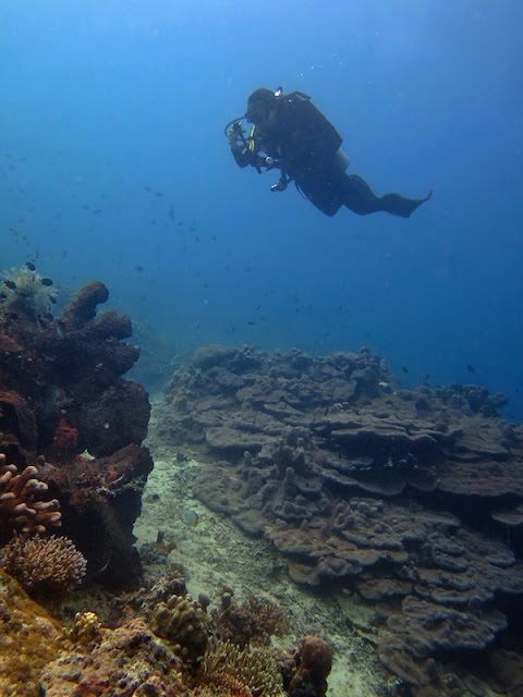 "<a href=""http://mataram.info/things-to-do-in-bali/visitindonesia-banda-marine-life-the-paradise-of-diving-topographic-point-inward-fundamental-maluku/"">Indonesia</a> best time to visit :; Diving Donggala: Menage Reef"