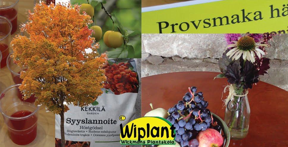 Shoppingtorsdag och Slättens Mystik på plantskolan