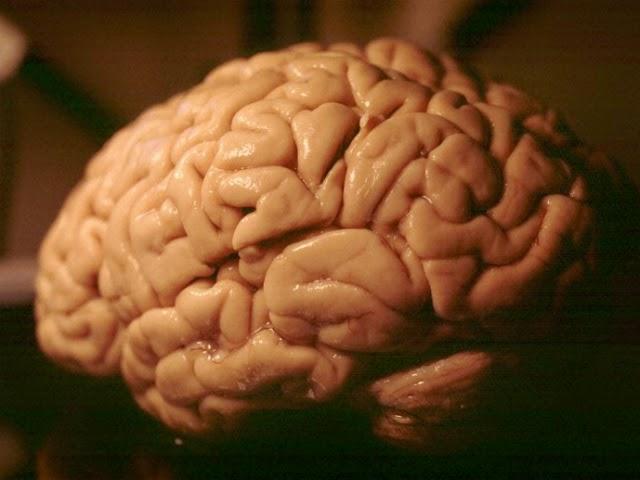 Simulació d'un Segon d'Activitat del Cervell Humà