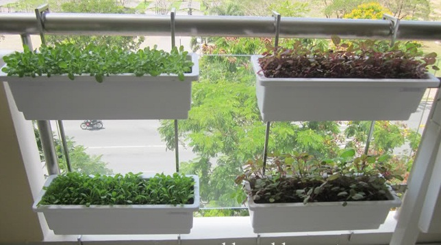Móc treo và chậu nhựa trồng rau