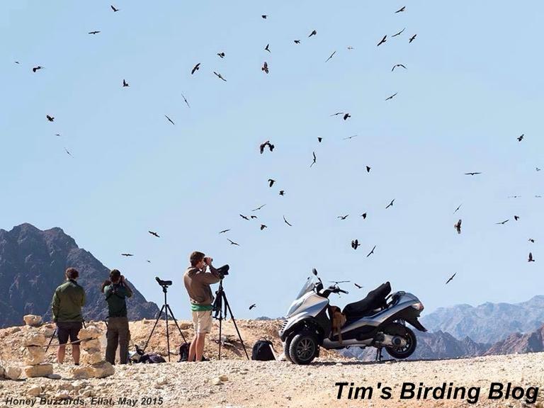 Tim's Birding Blog