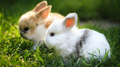 Cute Rabbit Photos