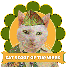 Cat Scout of the Week