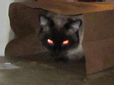 Evil Cat Gif Evil cat bag