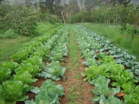 Agricultura org nica producci n de alimentos sanos for Construir mesa de cultivo