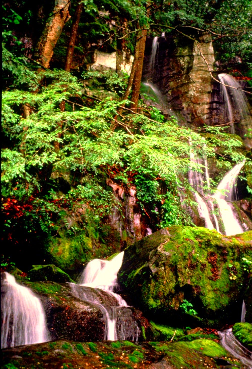 Smoky Mountain National Park (National Park Service photo)