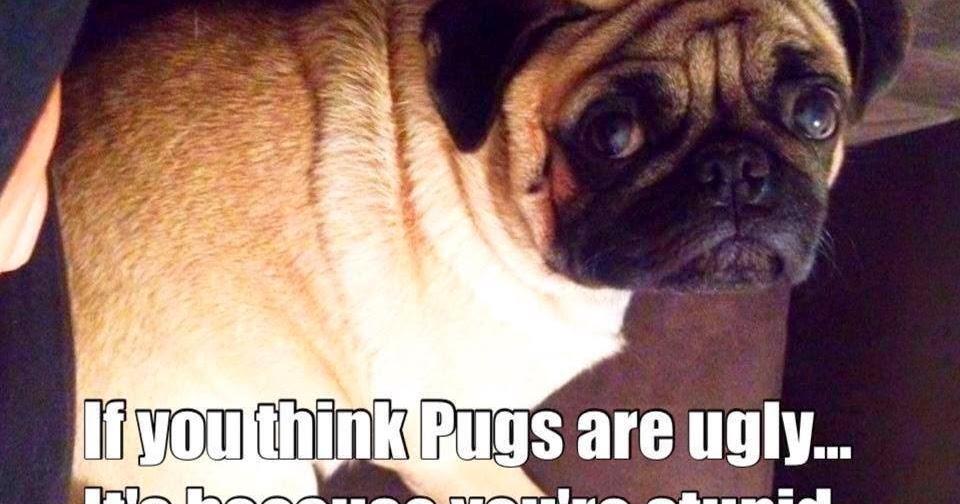 Ugly Pug Dog Toy
