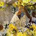 Padroeira de Parintins em peregrinação pelo AM