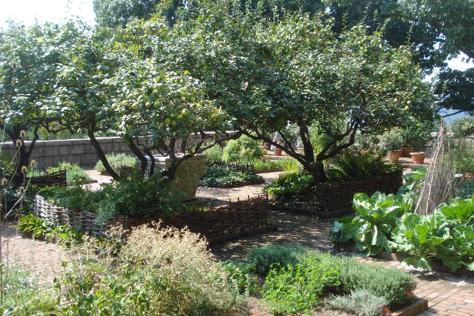 Medicinal Herb Garden Design Photograph The medicinal herb