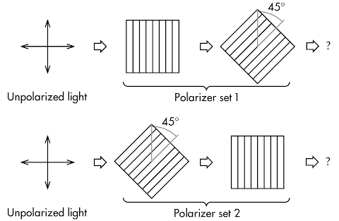 polarized light essay Unusual college essay questions for most of the essay prompts are predictable the mantis shrimp can perceive both polarized light and multispectral.