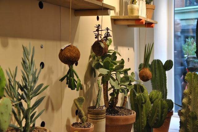 Kaktus København in der Jægersborggade